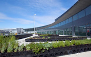 Airline Establishes Airport 'Farm'